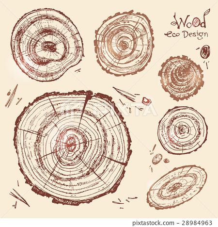 Hand drawn vector wooden slice. Pine tree. Organic 28984963