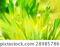 Green grass  bokeh nature background. 28985786