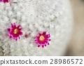 仙人掌 花朵 花卉 28986572