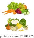 fresh, organic, vegetable 28986925