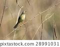鸟儿 鸟 小 28991031