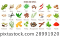 Big vector set of popular culinary herbs and 28991920