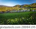 cherry orchard in a small village in Slovakia 28994195