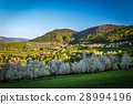 cherry orchard in a small village in Slovakia 28994196