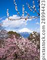 이와 모토 산 공원 28994423