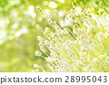Green bokeh nature background. 28995043