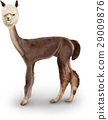 อัลพาก้า,สัตว์,ภาพวาดมือ สัตว์ 29009876