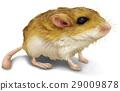 鼠標 老鼠 深灰色 29009878