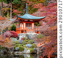 The leave change color of red in Tample japan. 29010717