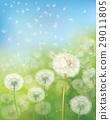 dandelion, flower, field 29011805