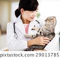 兽医 猫 猫咪 29013785