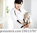 兽医 猫 猫咪 29013787