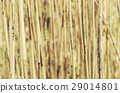 Dry reed background 29014801