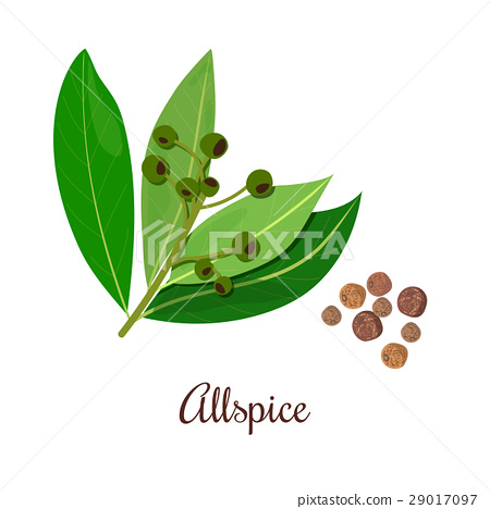 Blossoming Allspice with seeds. 29017097