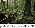 숲, 수풀, 삼림 29017796