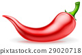Red Chilli Pepper 29020718