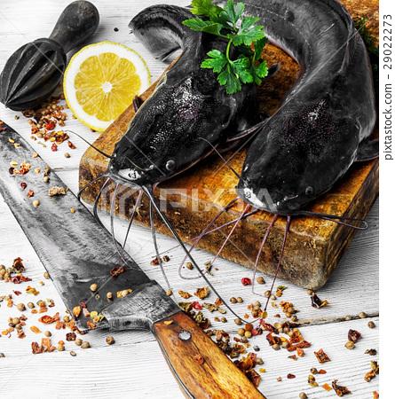 raw fish catfish 29022273