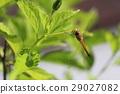 蜻蜓 蟲子 漏洞 29027082