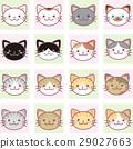 猫 猫咪 小猫 29027663