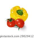 蔬菜 西红柿 番茄 29029412