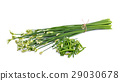 Chives flower or Chinese Chive on white background 29030678