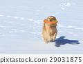 개, 강아지, 대형견 29031875