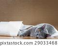 British Blue cat and toilet paper. 29033468