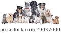 Big group of pets 29037000