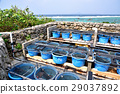 오키나와 츄라 우미 수족관 바다 거북 사육 시설 29037892