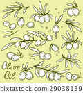 set of isolated graphic olives 29038139
