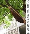 蜜蜂 树木 树 29040895