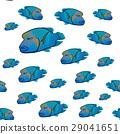 Cheilinus undulatus pattern. Napoleon fish 29041651