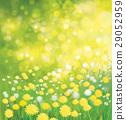 dandelion, flower, field 29052959