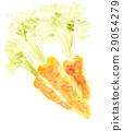 胡蘿蔔 根菜類 塊根類蔬菜 29054279