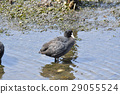 Yatsu tidelid野鳥 29055524