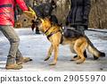 police, shepherd, dog 29055970