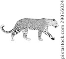illustration of leopard, graphic vector animal 29056024