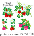 fruit, strawberry, raspberry 29058810