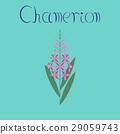 flat illustration on background herbal Chamerion 29059743
