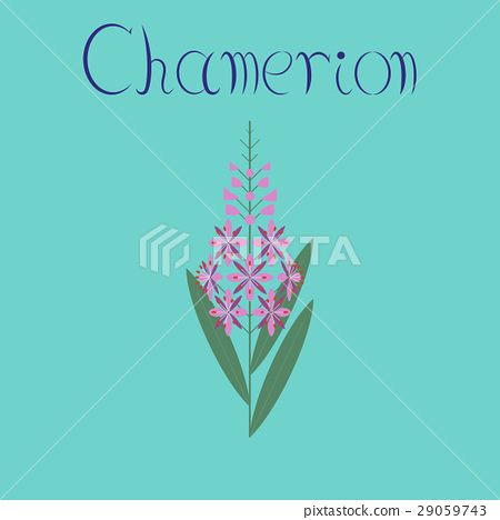 flat illustration on background herbal Chamerion 29059743