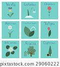 assembly flat Illustrations nature Convallaria 29060222