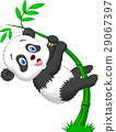 动物 竹子 竹 29067397