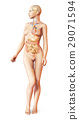 Female naked body, with full endocrine system superimposed. Anatomy image. 29071594