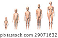 Female human body scheme of different ages stages. 29071632