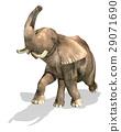 Elephant On white background. 29071690