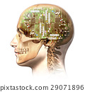 Male human head with skull and artificial electronic circuit brain in ghost effect, side view. 29071896