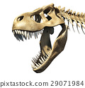 T-Rex skull close-up. 29071984