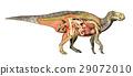 dinosaur, anatomy, iguanodon 29072010