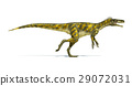Herrerasaurus dinosaur, photorealistic representation. Side view. 29072031
