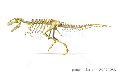 Gigantosaurus dinosaurus full photo-realistic skeleton, side view. 29072033